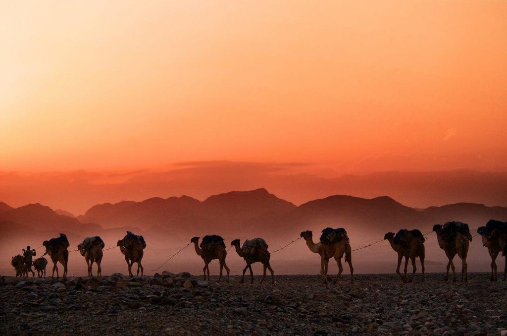 Сафари в Эифопии