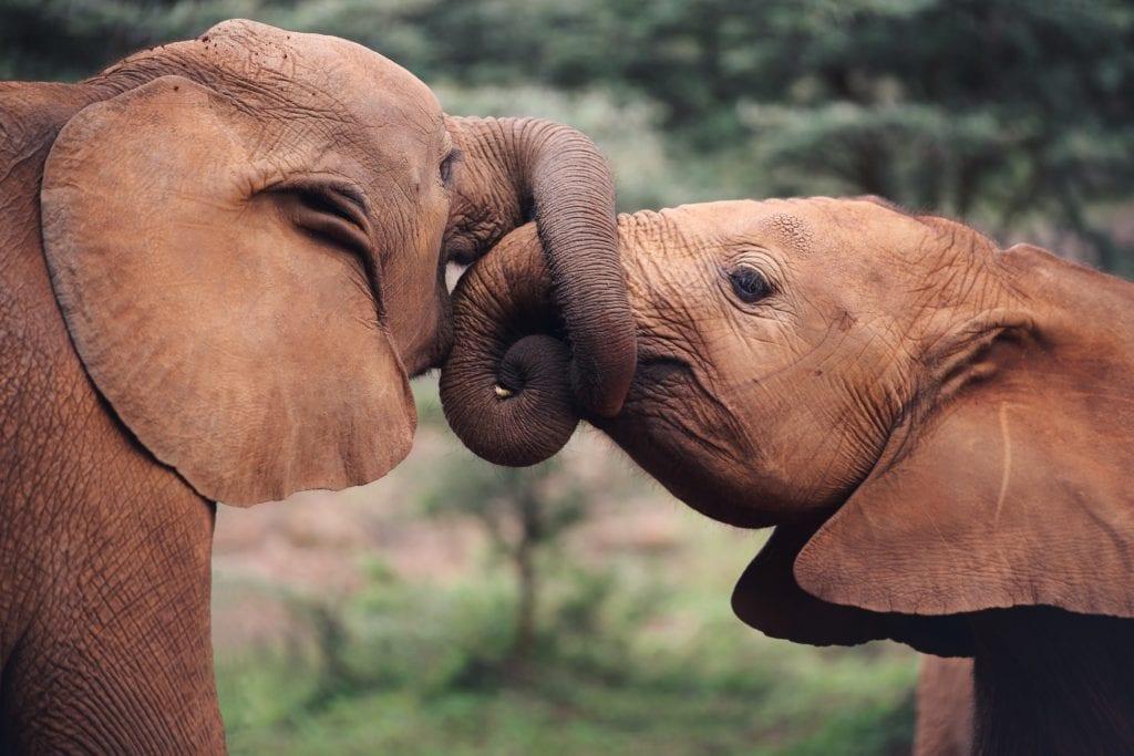 Тур на джипах по Кении