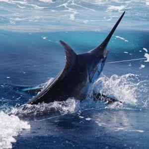 Рыбалка на Кабо Верде
