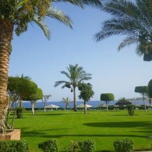 Туры в Египет, горящие, Grand Oasis