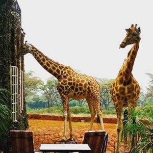 Giraffe Manor, Kenia