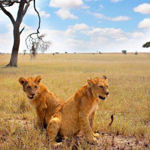экскурсия в национальный парк Танзании