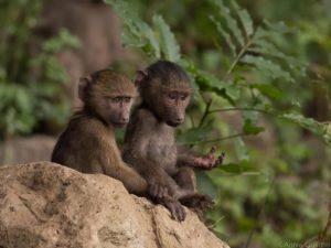 Национальный парк Тарангире, заповедник Нгоронгоро + Килиманджаро.