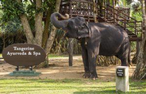 Tangerine Beach Hotel Калутара Шри Ланка