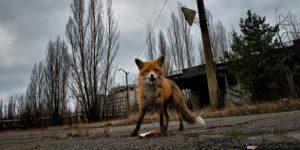 Trip to Chernobyl Zone