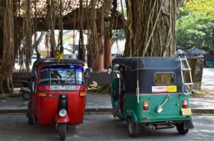 Горящие туры на остров Шри Ланка